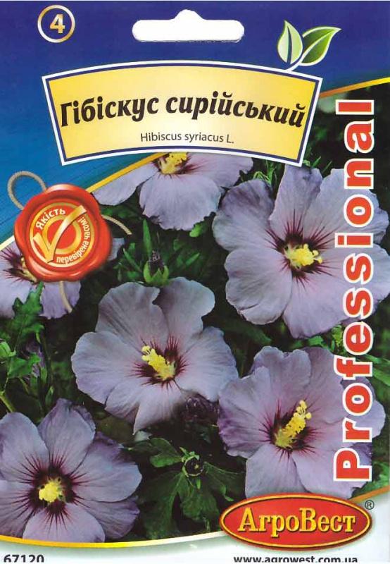 Травянистые гибискусы выращивание из семян 45